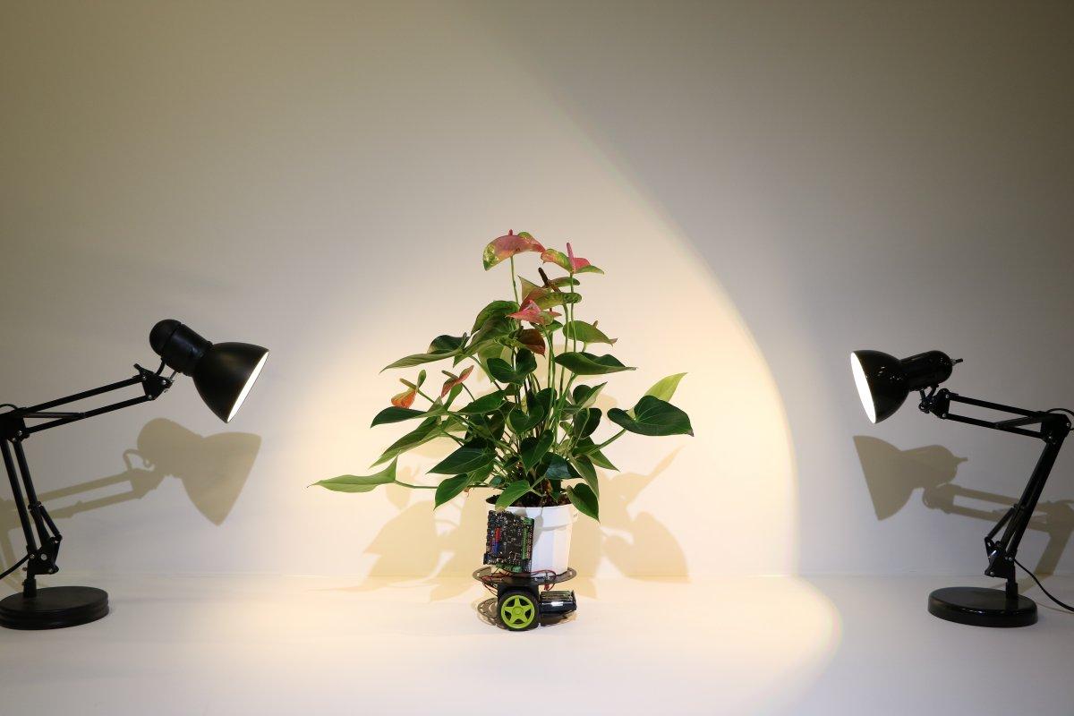 Hybrider Pflanzen-Roboter: Elowan, die Cyborgpflanze auf Rädern