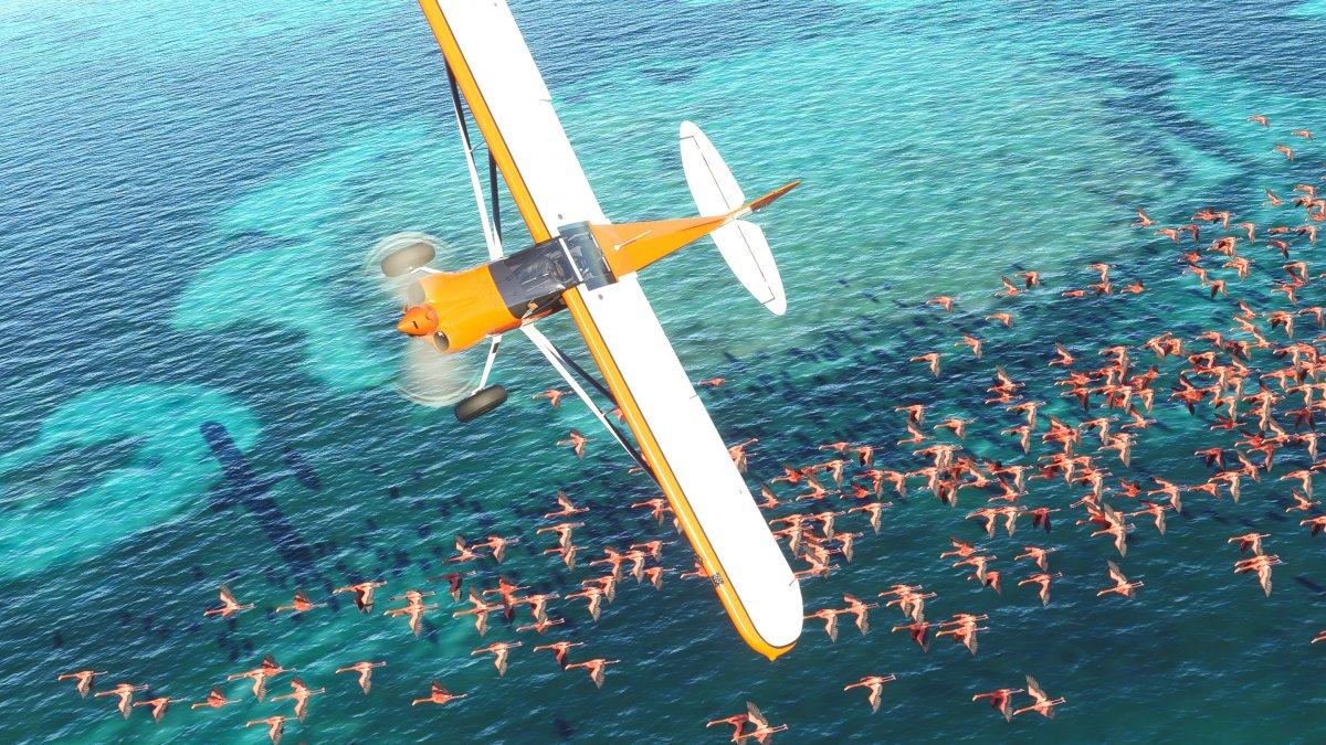 Flight Simulator 2020: Microsoft sucht Spieler für Alpha-Test
