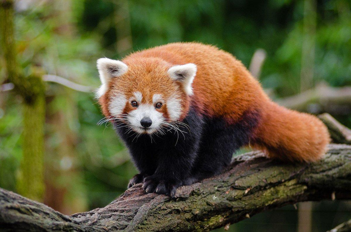 Firefox 86: Neue Browser-Version mit Komfort- und Sicherheitsverbesserungen - heise online