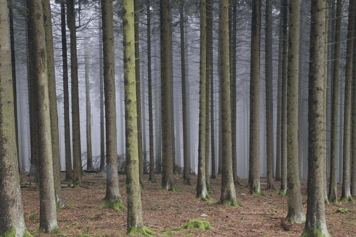 Warum wir Klimaschutz und Artenschutz zusammendenken müssen