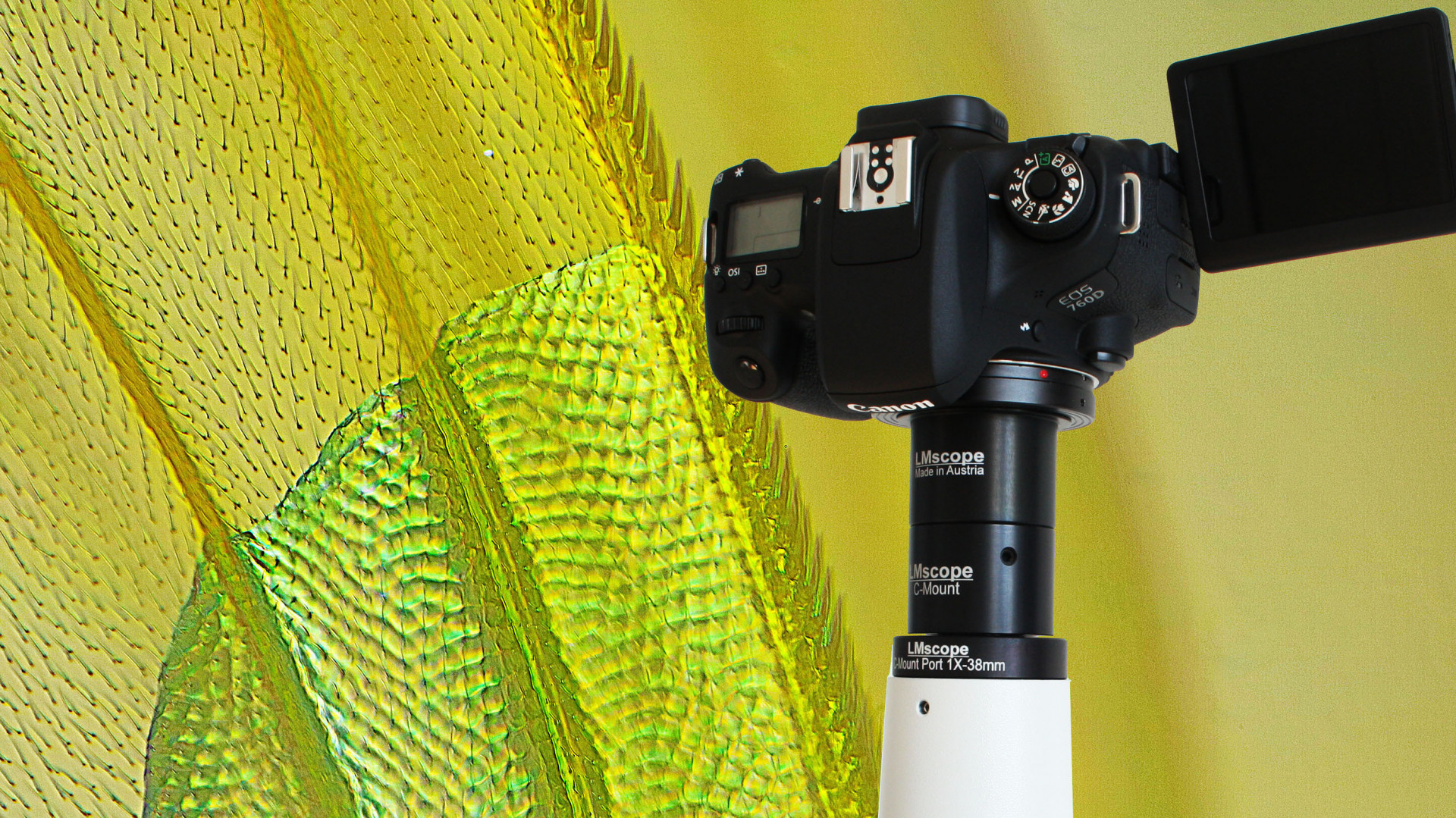 Tipp: micro tech lab mikrosop adapter für dslr und spiegellose