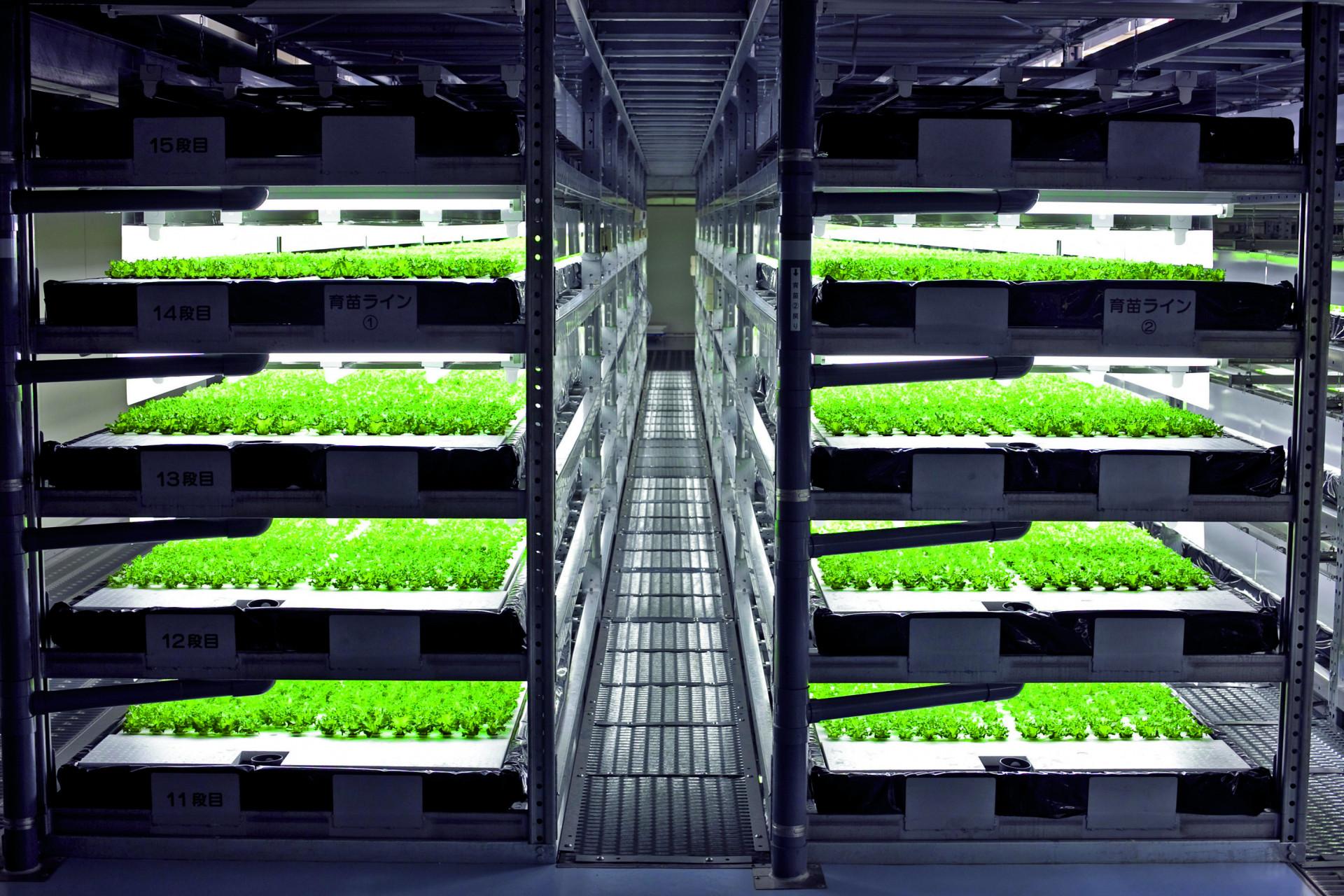 Japan: Salat aus Roboterhand
