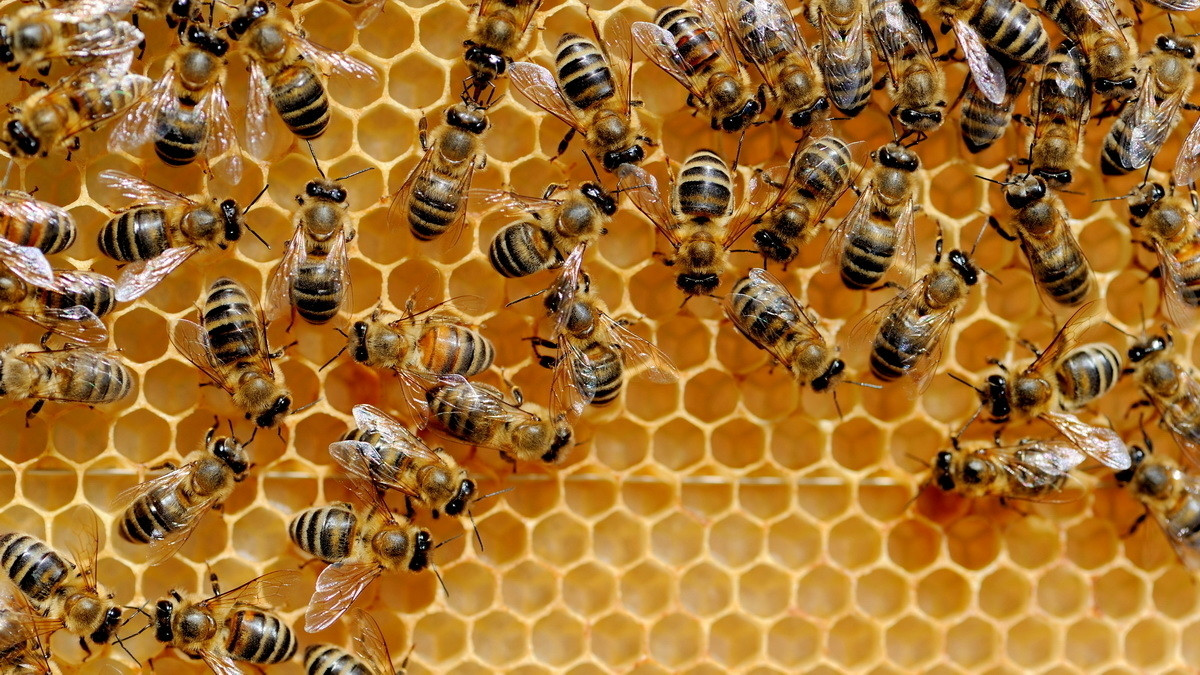 Internet der Dinge: HiveMQ wird Open Source
