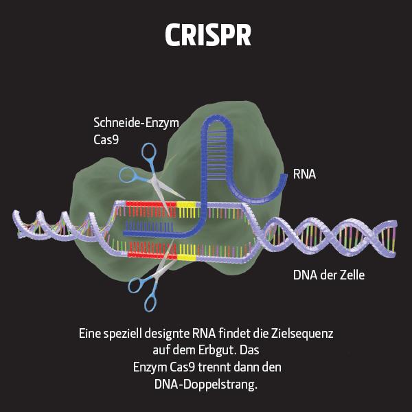 13.000 CRISPR-Editierungen in einer Zelle