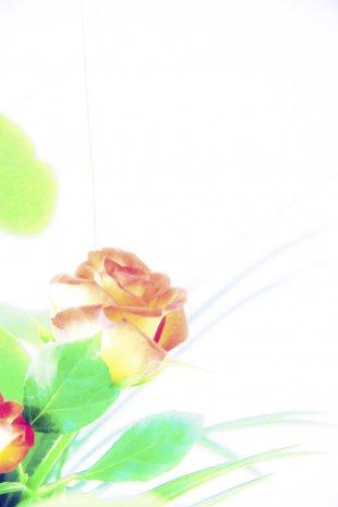 FB-Blumen-bearb.jpg von Frank Behrend
