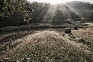 Ein richtig schöner Morgen. von Nenali