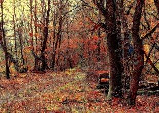 Herbstwald von Eberhard  Schmidt-Dranske
