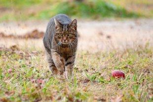 Katze von Saskia31