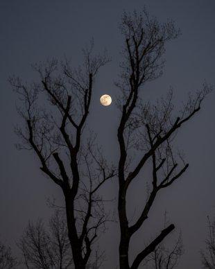 Mond von 35mm