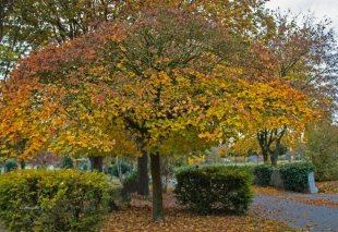 Herbst von lachnummer (1)