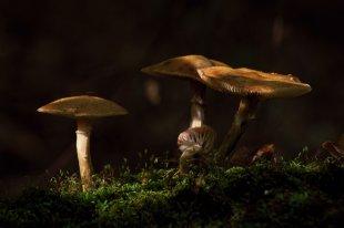 Pilzzeit von dh_zelmen