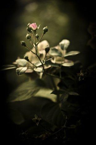 Spätsommerblüte von Bernd Unger