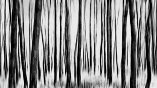 abstrakter Wald 2 von metapix
