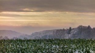 Wintermorgen von Winwood