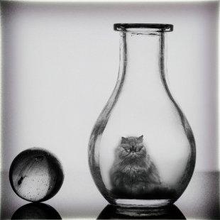Ein Glas saure Katze von Daborius