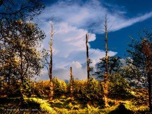 Natur von Karl Hotz-Thelen