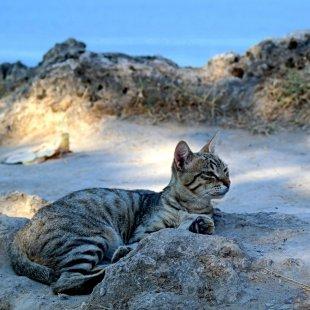 Klippen.Katze. von Mira1959