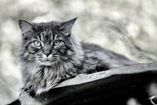 Katze auf dem heißen Blechdach von Ma07
