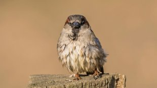 Angry Bird von Ruhrradler