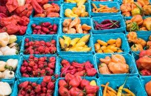 spicy variety von robinio