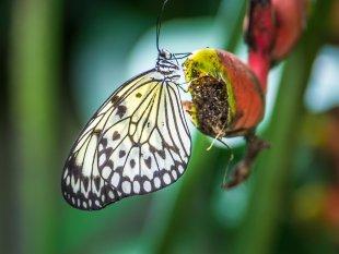 Schmetterling (01) von NeuH