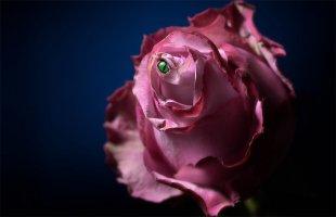 La Fleur du Mal von Rontrus