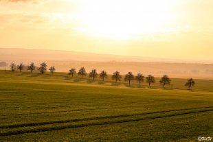 Sonnenanbeter von FotoKaFi