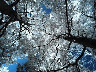 Eichholz von blueout
