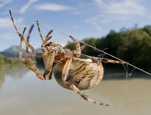 Die Welt der Spinne von Johannes Leckebusch
