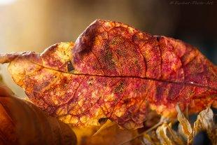 Herbst in Rot von H.-Dieter Fischer