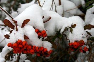 Winterbeeren von Heike Maier