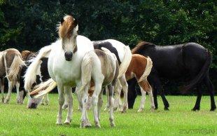 Pferdeblick von ORPl-lEUS