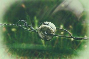 The Wire von dh_zelmen