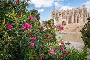 Kathedrale von Palma von ForgottenBanana