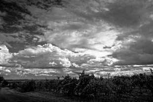 Der Wein im Wind von Bernd Unger