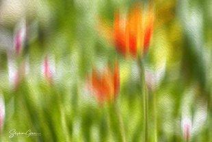 Frühling von Stephan Gläser