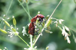 Blütensex II von  Bühler
