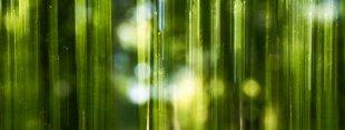 Frühlingswald von FelixW80