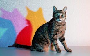 314/365 - Dreifarbige Katze von micha0001a