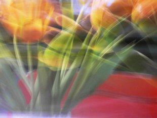 was Tulpen so treiben von baumfrosch