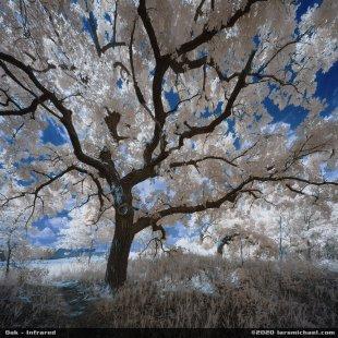 Eiche - Magischer Baum von lmichael