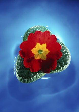 FB-Blume-I-imWasser.jpg von Frank Behrend