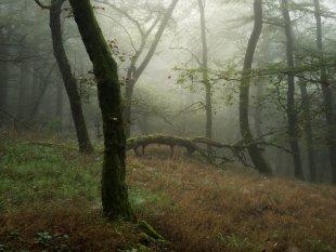 Im Wald von FelixW80