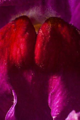 FB-Macro-III-set-Orchid045-I-.jpg von Frank Behrend