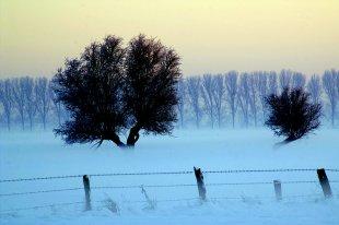 Baum Nebel von benderson