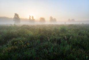 Sonnenaufgang im Nebel von FelixW80