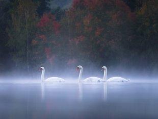 Herbstmorgen von FelixW80
