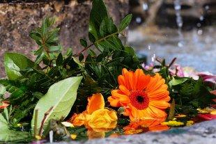 Das Blumenbad von tlufotos