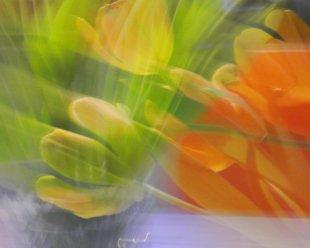rotgelbgrün von baumfrosch