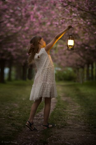 Lantern & Sakuras von robbyrob76
